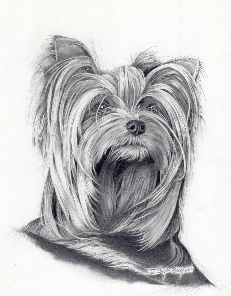 Line Drawing Yorkie : Yorkie line drawing imgkid the image kid has it